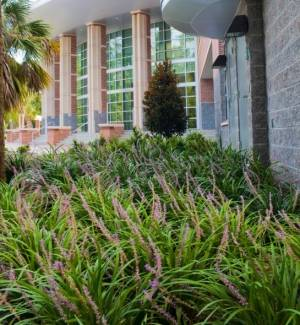 Springtime blooms grace the exterior of the newly completed Martin H. Levin Advocacy Center on the campus of UF Levin College of Law.