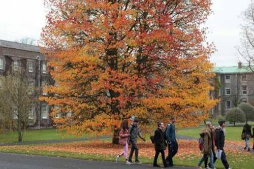 Maynooth University Graduation Tree