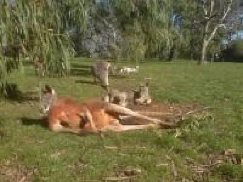 Adelaide Cleland Park